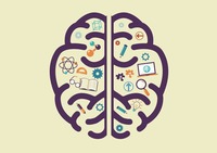 Human brain with education concept