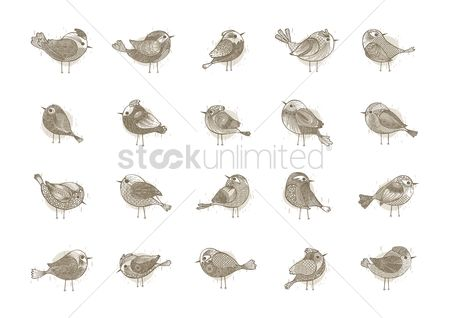 Animal : Collection of birds