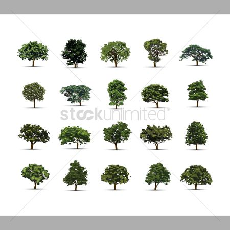 Environment : Collection of trees