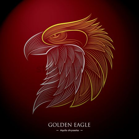 Birds : Golden eagle background