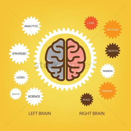Infographic : Infographic of brain