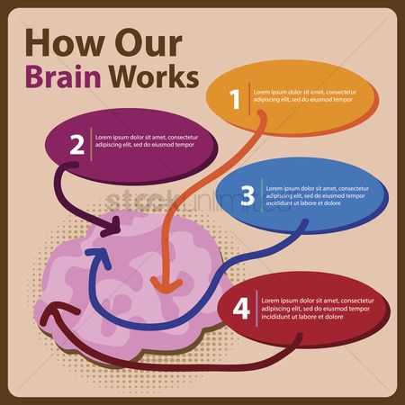 Brain : Infographic on how our brain works