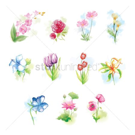 Floral : Set of flowers
