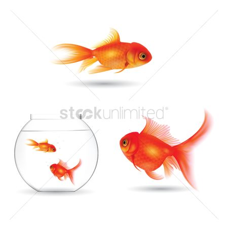 Water : Set of goldfish