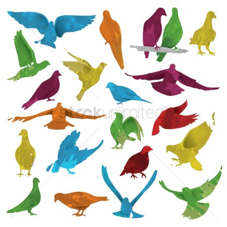 Birds : Set of watercolor birds
