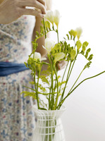 Arranging freesias in vase