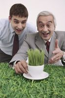 Businessmen looking at cup of grasses