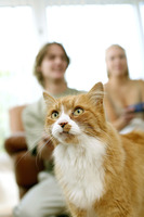 Focus on a cat with couple playing video game console in the background