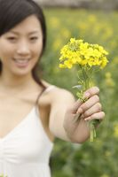 Woman holding oilseed rape