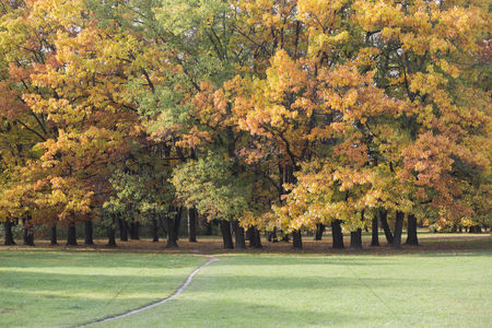 Environment : View of autumn trees in park