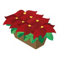 Popular : Christmas poinsettias flower