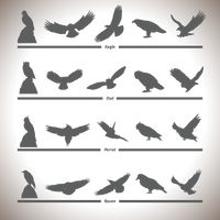 Silhouette collection of birds