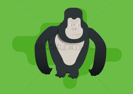 Annoy : A gorilla looking annoyed