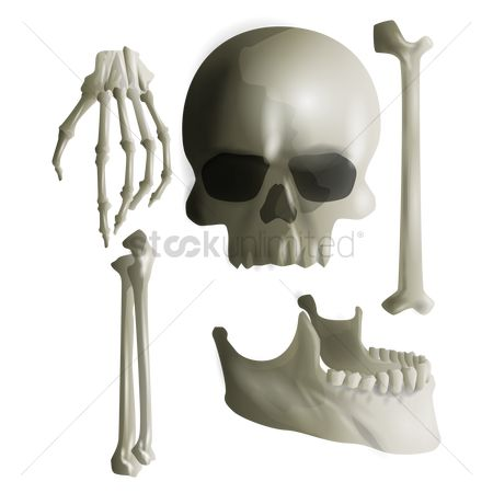 Arm : A set of human bones