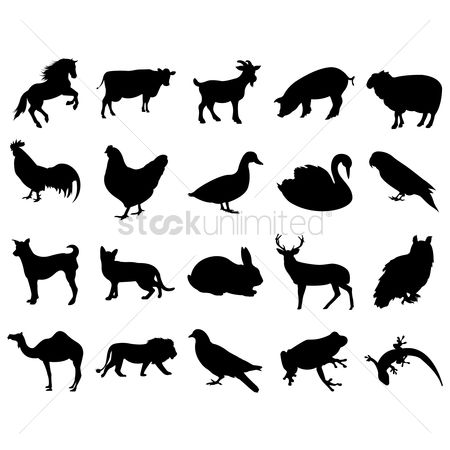 Cow : Animal silhouette collection