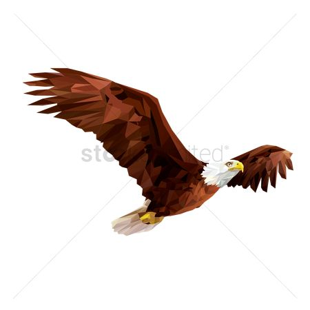 Hawks : Bald eagle