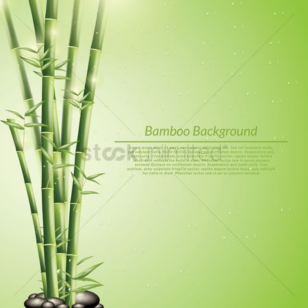 Zen : Bamboo background