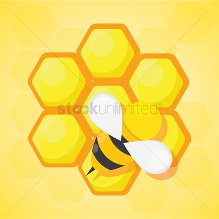 Honeycomb : Bee and honeycomb