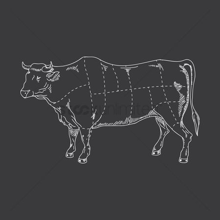 Cow : Beef cut diagram