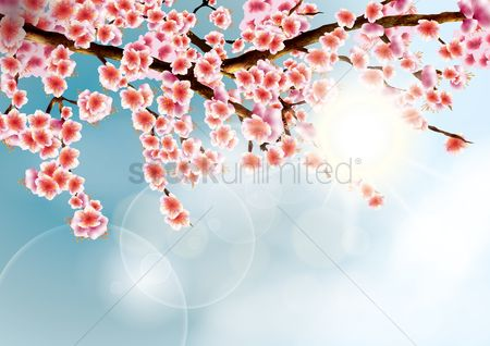 Floral : Cherry blossom background