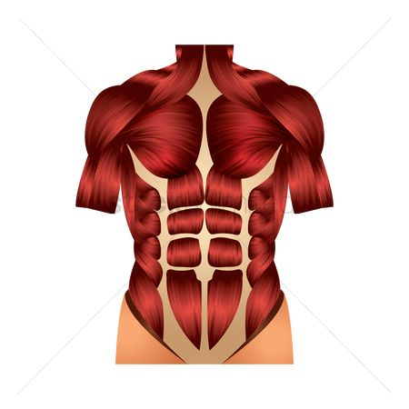 Strength exercise : Chest muscles