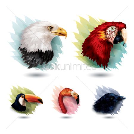 Hawks : Collection of birds
