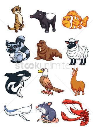 Hawks : Collection of cartoon animals