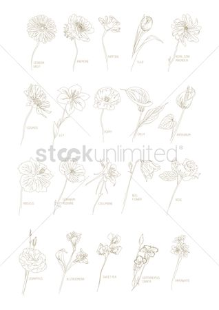 Royal : Collection of different flowers