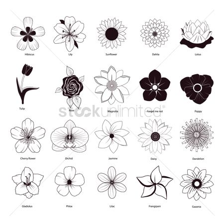 Linear : Collection of different flowers