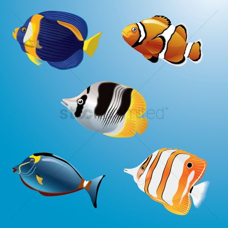 Marine life : Collection of fishes