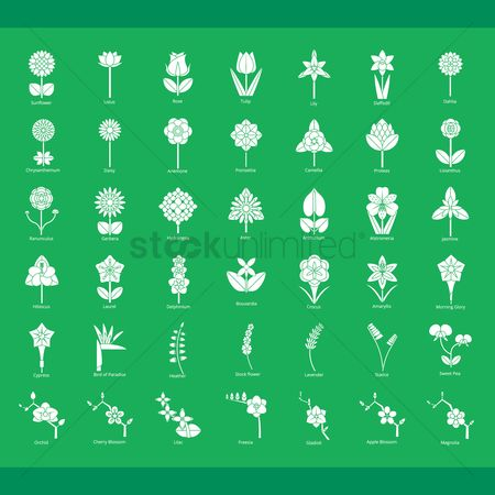 Laurel : Collection of flower icons