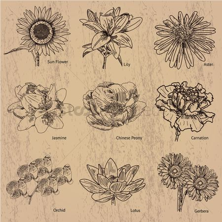 Sketching : Collection of flowers