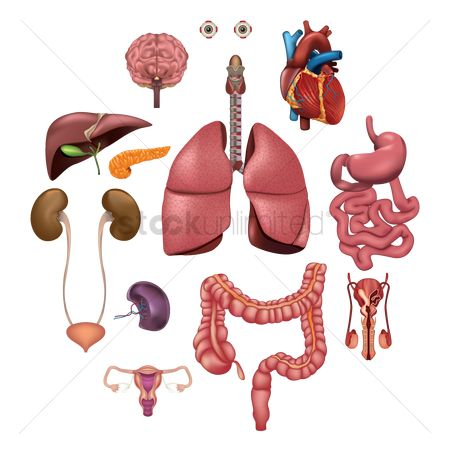 Health : Collection of human organs