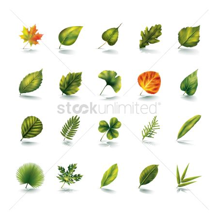 Summer : Collection of leaves