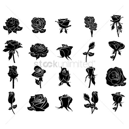Rose : Collection of rose icons