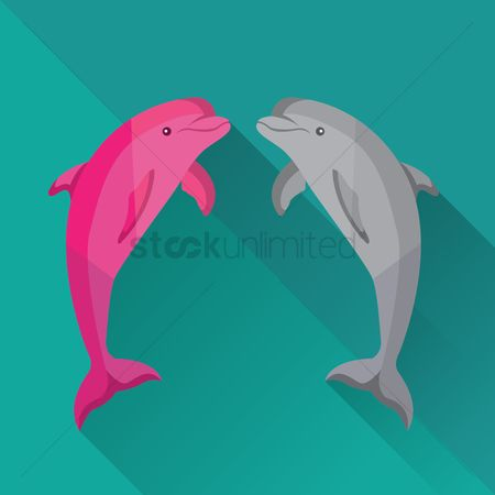 Dolphins : Dolphins