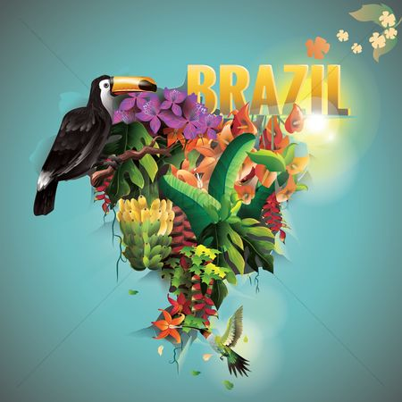 Toco toucan : Double exposure of brazil map with forest