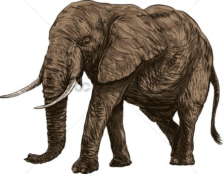 Drawings : Elephant