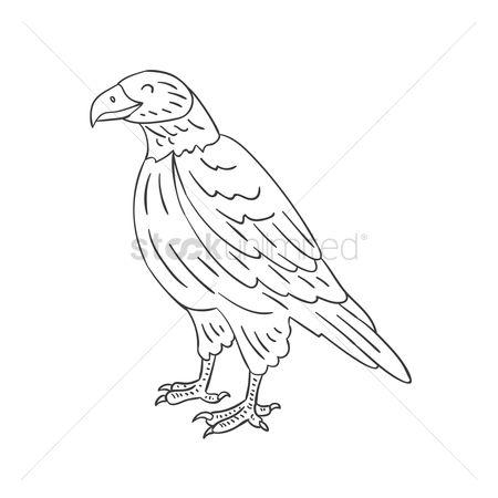 Free Falcon Stock Vectors