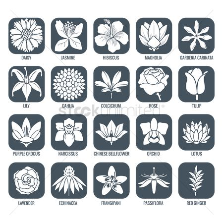 Fragrance : Flower icons