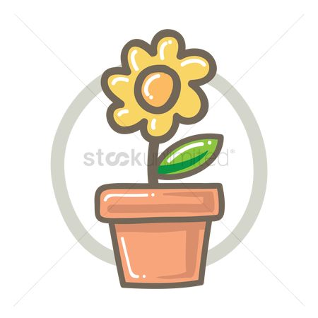Flower pot : Flower plant in pot