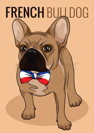 French : French bulldog poster