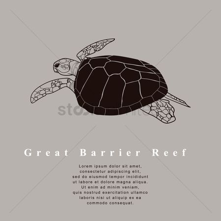 Barrier : Great barrier reef sea turtle design