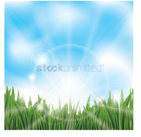 Grass background : Green grass against blue sky