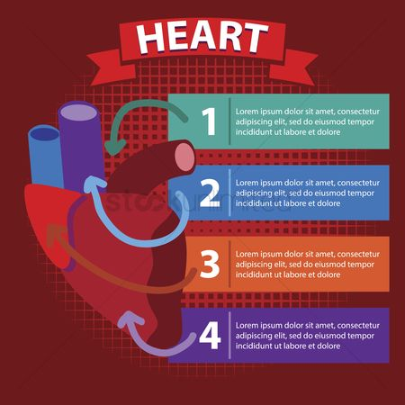 Medical : Human heart infographic