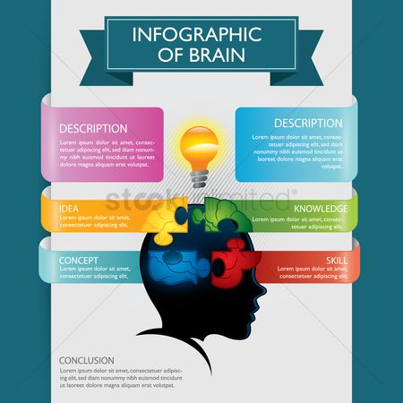 Knowledge : Infographic of brain