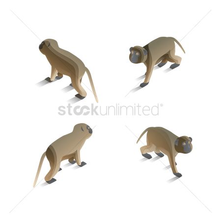 Backview : Isometric monkeys
