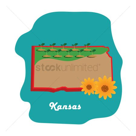 Kansas : Kansas state map with sunflower