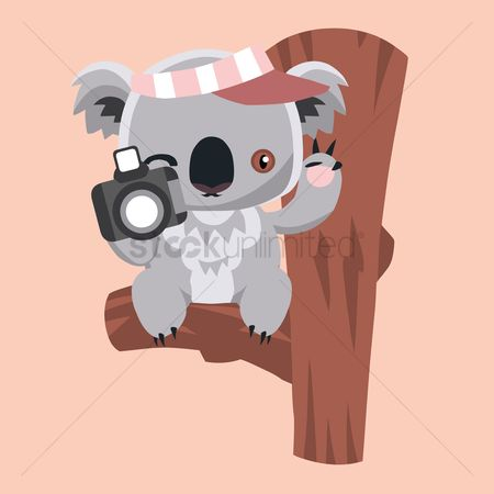 Photographers : Koala bear holding a camera