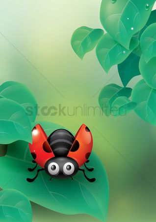 Water drops : Ladybug on a leaf